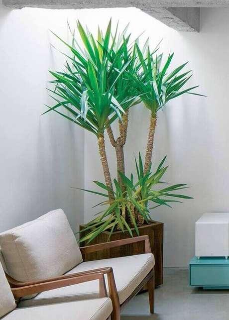 40- A Yuca é uma espécie ornamental e escultural de plantas cultivadas dentro de casa. Fonte: Leonardo Finotti (Editora Globo)