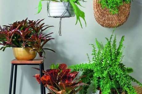 4- As plantas para cultivar dentro de casa ajudam a repor as energias. Fonte: Luís Gomes/ Minha Casa