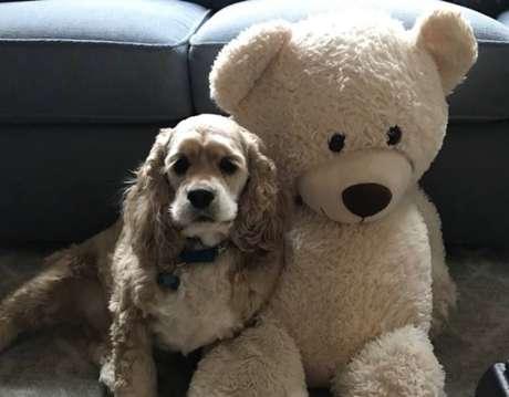 O cãozinho Habs ao lado de seu melhor amigo, um urso de pelúcia.