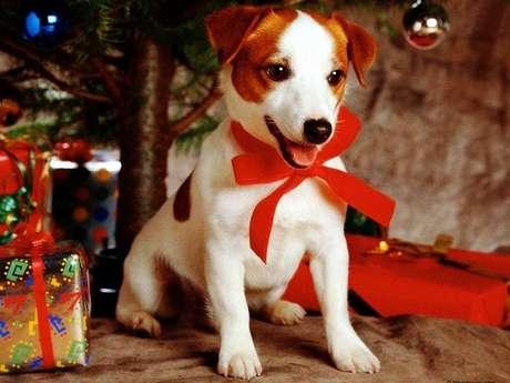 Animal é o presente de natal que precisa ter um futuro garantido