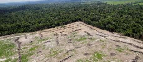Em 2018, taxa de desmatamento da Amazônia foi a mais alta da última década: 7,9 mil km²