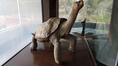 Os restos de George foram embalsamados nos Estados Unidos e voltaram às Ilhas Galápagos em 2017