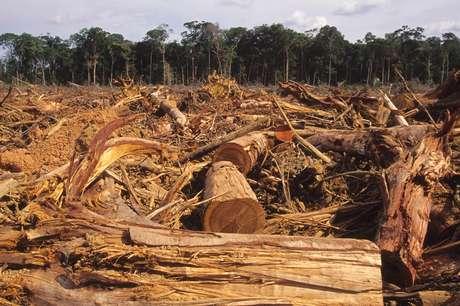 Desmatamento da Amazônia caiu 12% entre agosto de 2016 a julho de 2017