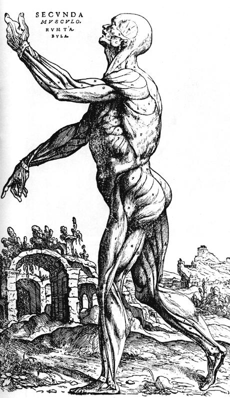 O Homem devassado de Vesálio século XVI
