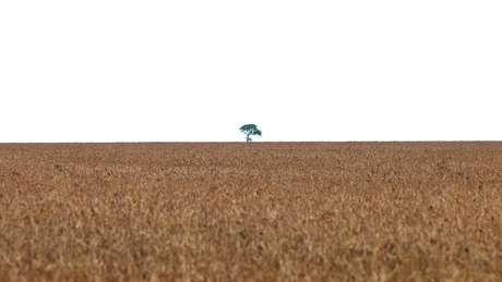 Plantio de soja em larga de escala é associado a desmatamento do Cerrado e da Amazônia