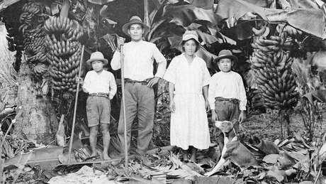 No início da imigração japonesa, soja não era produto prioritário em termos econômicos - mas teve cultivo em pequena escala para consumo familiar   Foto: Acervo do Museu Histórico da Imigração Japonesa no Brasil