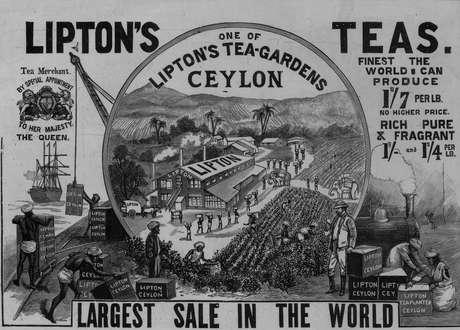 Lipton tinha muitas plantações no Sri Lanka, então conhecido como Ceilão