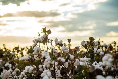 Como lidar com a colheita do que semeamos no passado?