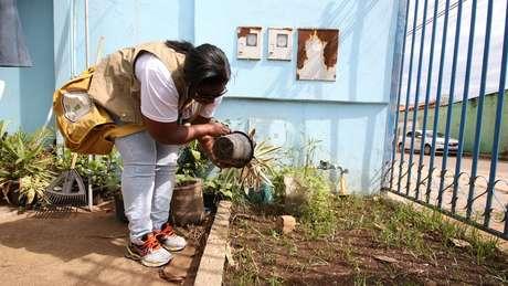 Verão favorece reprodução do mosquito Aedes aegypti