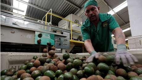 A produção em massa de abacates pode ser responsável por secas em algumas áreas