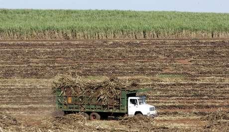 Plantação de cana no Estado do Paraná 11/03/2006 REUTERS/Paulo Whitaker
