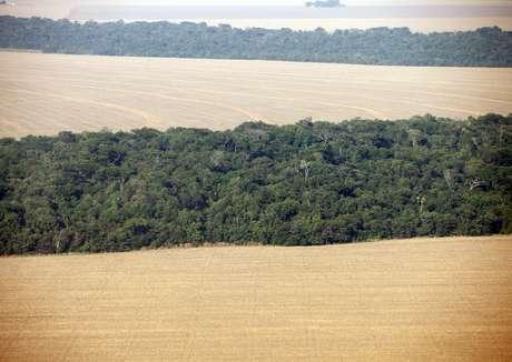 Plantações de soja cercadas por floresta, no Mato Grosso 09/09/2011 REUTERS/Paulo Whitaker