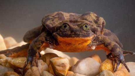 Romeo foi descrito por bióloga como sendo 'meio tímido e lento'
