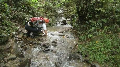 Expedição procurou sapos em riachos de florestas nubladas no alto das montanhas da Bolívia
