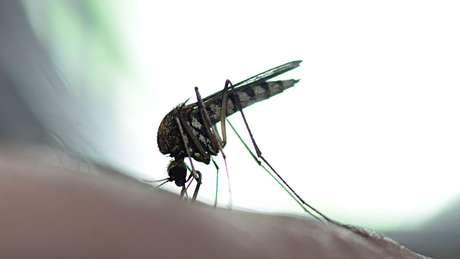 Doença é transmitida por meio de picada de mosquito