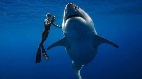 Os mergulhadores estavam tão perto do tubarão-branco que podiam até tocá-lo
