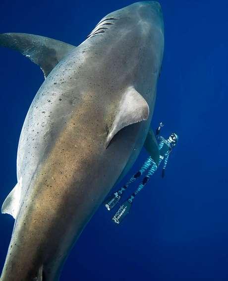 A mergulhadora Ocean Ramsay, amiga de Kimberly, ao lado do tubarão-branco - seu comprimento equivale à altura de uma girafa adulta