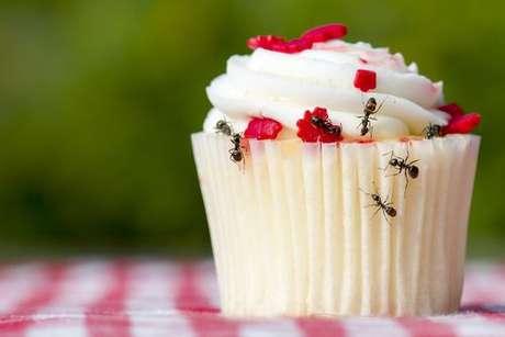 Saiba como se livrar de pragas como a formiga!
