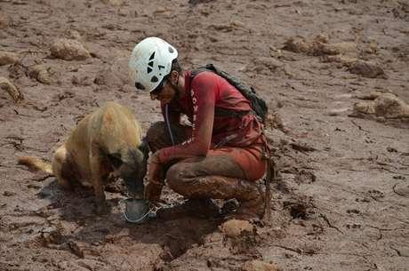 Cães farejadores trabalham com os Bombeiros à procura de vítimas da tragédia.