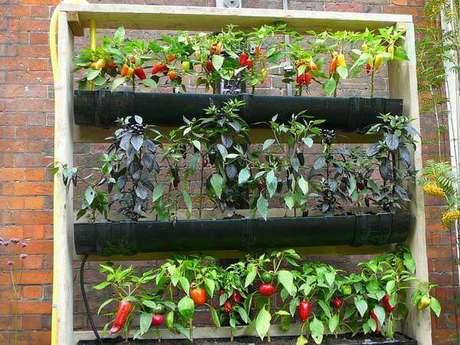 38. Você pode plantar diferentes espécies de pimentas na sua horta vertical. Foto de Pinterest