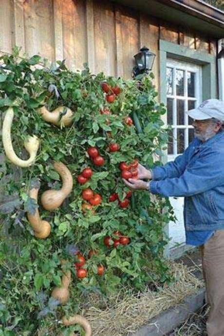 6. Para aqueles que possuem mais habilidades com plantas, é possível arriscar e plantar algumas leguminosas na horta vertical
