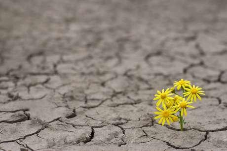 Vencendo o deserto da solidão