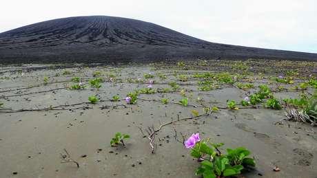 Vegetação nascida de sementes espalhadas por aves está colonizando a lama, na nova ilha do Pacífico