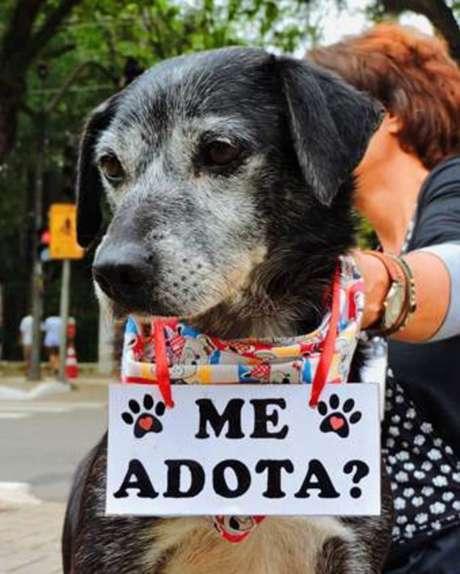 A ONG Adode Um Amicão provome ação no Shopping Pátio Paulista neste fim de semana.