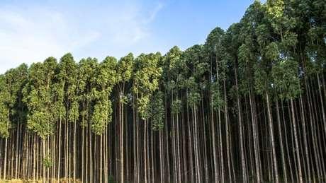 Deputado Newton Cardoso Júnior, cuja família tem investimentos no setor madeireiro, defende que fazendas de eucalipto sejam dispensadas de qualquer licenciamento quando o cultivo ocorrer em áreas rurais já consolidadas ou já degradadas pela ação humana