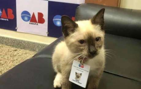 Leon foi adotado pela OAB do Amapá.