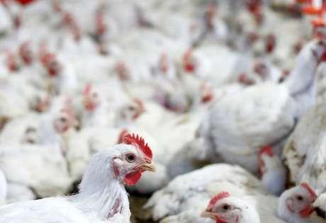 Aves em indústria de frangos de Lapa, PR 31/05/2016 REUTERS/Rodolfo Buhrer