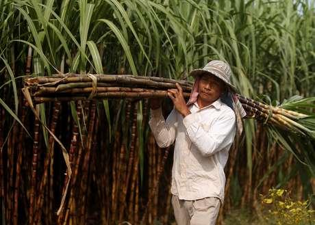 Plantação de cana-de-açúcar em Kandal, no Camboja 23/01/2019 REUTERS/Samrang Pring