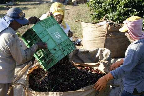 Trabalhadores empacotam café arábica em Alfenas, sul de MG 07/07/2008 REUTERS/Paulo Whitaker