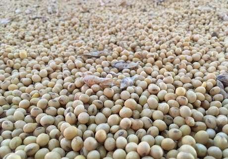 Grãos de soja em Rio Verde, no Estado de Goiás 31/01/2019 REUTERS/Jose Roberto Gomes