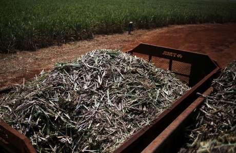 Cana-de-açúcar em Ribeirão Preto (SP) 15/09/2016 REUTERS/Nacho Doce