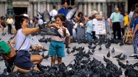 Pombos conseguiram que humanos compartilhassem seus alimentos