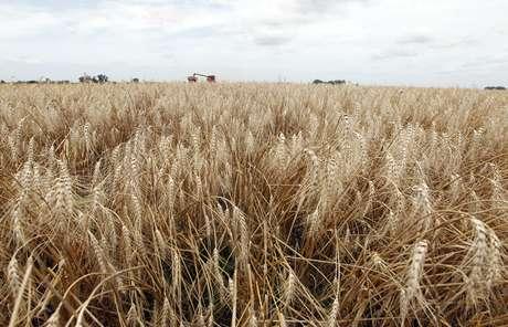 Plantação de trigo 18/12/2012 REUTERS/Enrique Marcarian