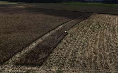 Plantação de trigo 23/04/2013 REUTERS/Nacho Doce