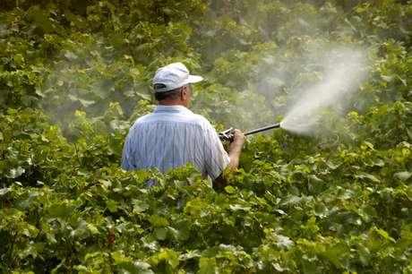 As principais preocupações quanto aos perigos dos agrotóxicos, de acordo com a entidade, são os trabalhadores da lavoura