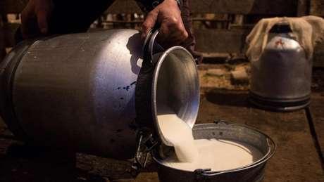 Na história de 300 mil anos da humanidade, beber leite é um hábito relativamente recente