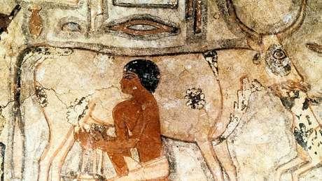 Obra de arte em túmulo egípcio mostra os primórdios do consumo de leite
