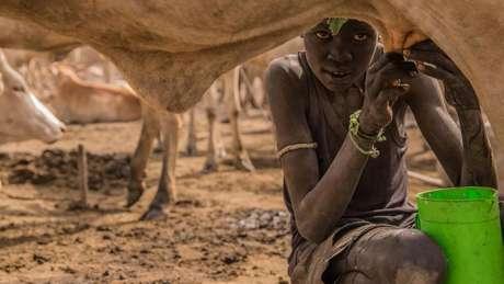 Um mistério duradouro é o motivo pelo qual apenas alguns grupos de pastores adquiriram persistência de lactase, enquanto outros, não