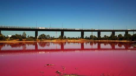 Este lago artificial de água salgada no Parque Westgate, em Melbourne, ficou rosa nas últimas semanas