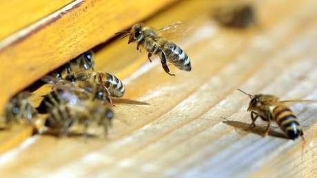 Médico afirma que casos semelhantes com abelhas ainda não haviam sido registrados na ilha