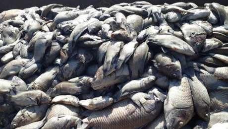 Ao menos 40 toneladas de peixes morreram após mudança na cor da água do Rio Tietê, em Sales, interior de São Paulo