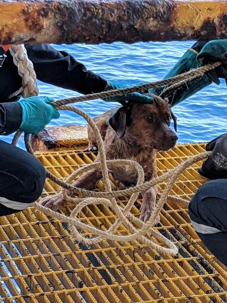 Cachorro molhado sobre a plataforma de petróleo da Chevron após nadar mais de 220 quilômetros.