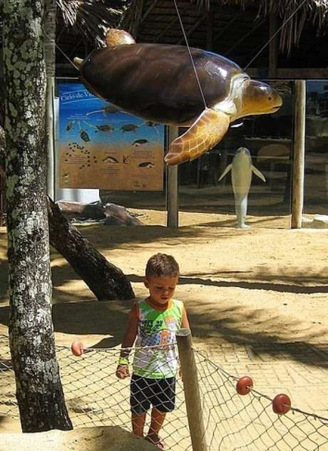 Projeto TAMAR – Praia do Forte, dica de passeio educativo e inspirador