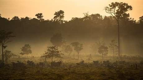 Em Mato Grosso, floresta amazônica dá lugar a pastagens