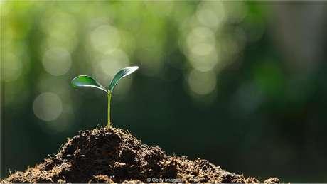 Se as mudas puderem ser protegidas nos primeiros meses, é mais provável que a cobertura florestal retorne