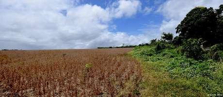 Plantio de soja nos limites da aldeia indígena Açaizal, no Pará